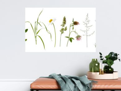 Stems of various meadow grass and flowers on white background