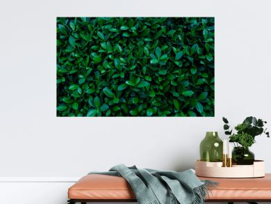 closeup nature view of green leaf texture, dark wallpaper concept, nature background, tropical leaf