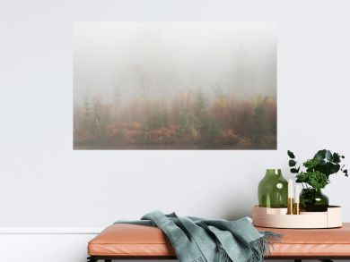 Beautiful mody Autumn Fall landscape of woodland with mist fog during early morning