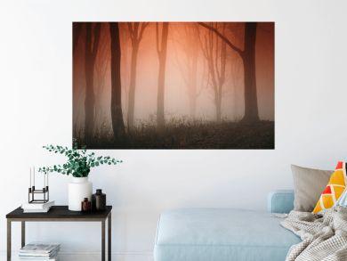 forest fog landscape in sunset light