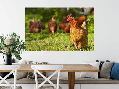 flock of chickens grazing on the grass