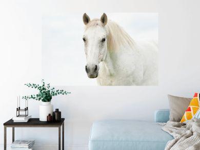 Portrait of beautiful white horse