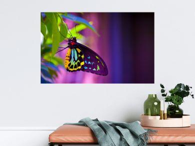 Neon butterfly