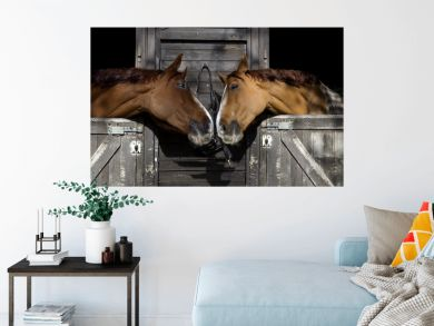 Horses in love