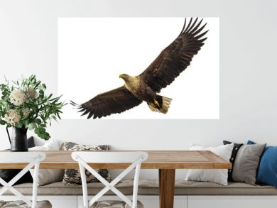Huge eagle in flight isolated on white
