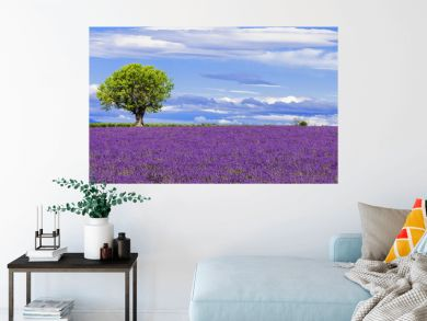 Panoramic view of lavender field with tree