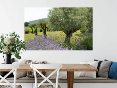 Lavender flower with beautiful olive trees