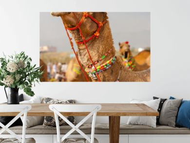 Decorated camel at the Pushkar fair. Rajasthan, India