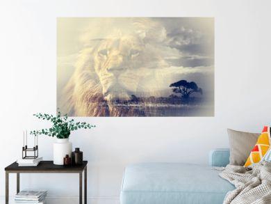 Double exposure of lion and Mount Kilimanjaro savanna landscape.