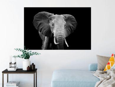 Elephant on dark background