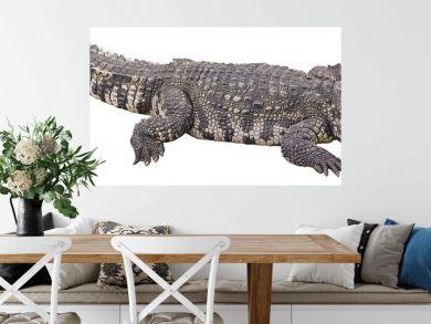 crocodile big