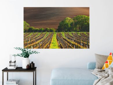France vineyard in the evening