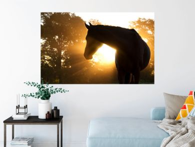 Beautiful Arabian horse silhouette against morning sun shining through haze and trees