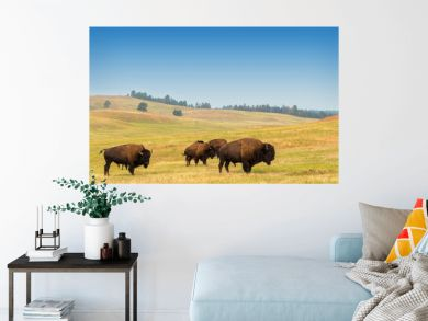 Herd of Buffalo