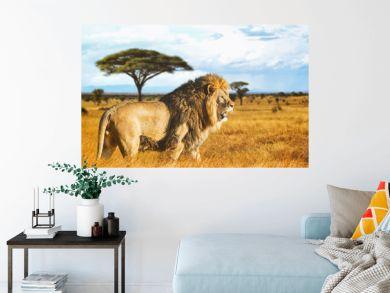 Lion de profil dans la savane
