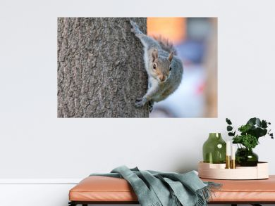 Gray squirrel on a tree