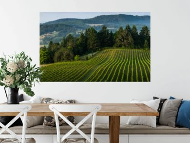 Willamette Vallley, Wine Country panorama