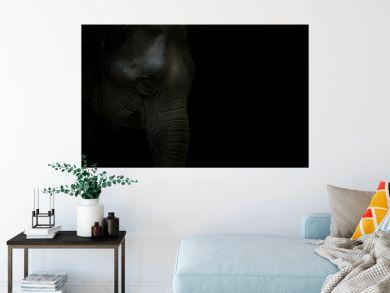 elephant head isolated on black background