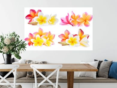 set of white and pink frangipani (plumeria) flower isolated on white background