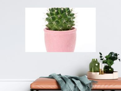 Cactus isolated on white background. Aloe and other succulents in colorful ceramic pot