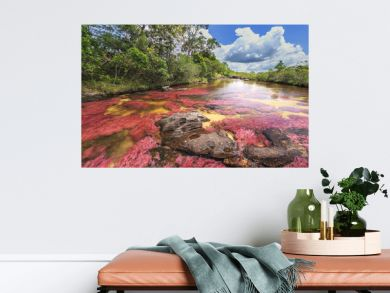 Cano Cristales (River of five colors), La Macarena, Meta, Colombia
