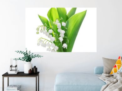 lily of the valley flower isolated on white