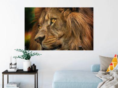 Colours portrait detail face lion