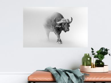 buffalo isolated on white background one of the big 5 animals of africa