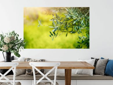 Fresh green olive tree branches