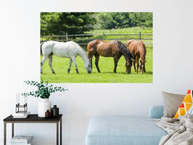Three horses, a gray, a bay, and a chestnut grazing in a pasture with a split-rail fence and trees in the background on a sunny day.