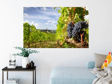 Harvest in Chianti vineyard landscape with red wine grapes and characteristic abbey in the background, Tuscany, Italy