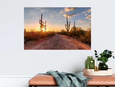 Travel in Arizona desert at sunset with Saguaro cacti in Sonoran Desert near Phoenix, Arizona.