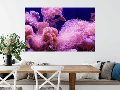 Underwater sea: pink coral reef background
