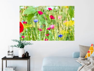 Panorama, colorful flower meadow at the heyday, poppies and other wildflowers