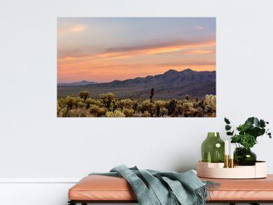 Cholla Cactus Garden Sunset in Joshua Tree National Park