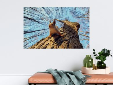Portrait of a funny squirrel on a tree