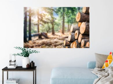 Forest pine and spruce trees. Log trunks pile,  the logging timber wood industry. Wide banner or panorama wooden trunks.