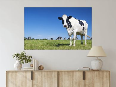 Panoramic view of black and white cow