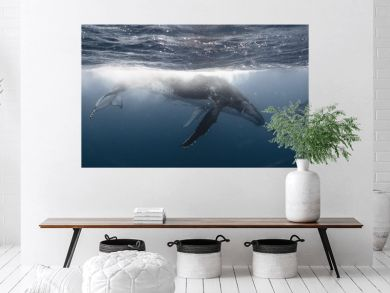Whale Kiss - Mother & Calf - Tonga