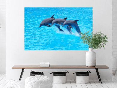 Leaping Bottlenose Dolphins, Tursiops truncatus