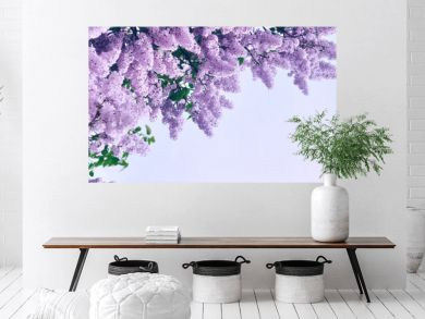Closeup of pink lilac flowers - pastel and soft focus processing. Background with free space for text.