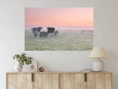 relaxed cows on misty pasture at sunrise