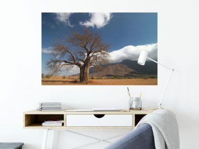 Baobab tree against cloudscape
