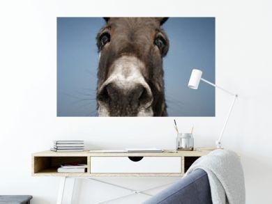 Donkey with blue background