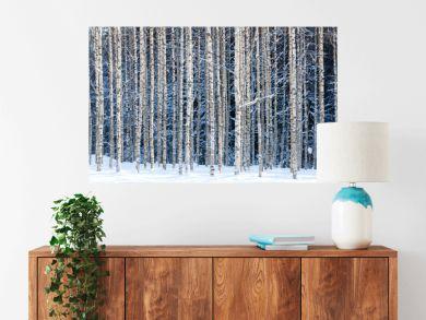 Snowy birches