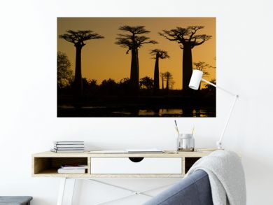 Sunset and baobabs trees