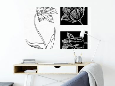 White and black tulips.