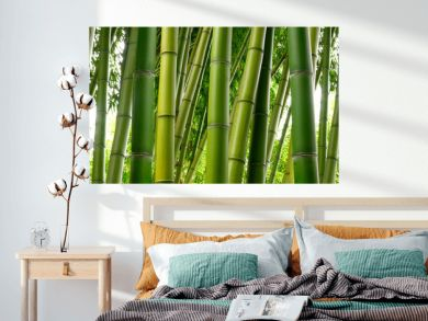 Sunlght peeks through dense bamboo