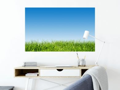 Green grass on blue clear sky, spring nature theme. Panorama