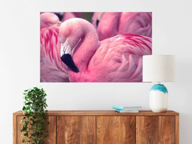 Chilean Pink Flamingo